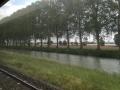 Canal_tree_windbreak