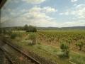 Pyranee_grapes