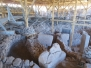 Göbekli Tepe: The New Cradle of Civilization