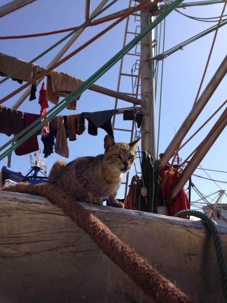 Cats ahoy!
