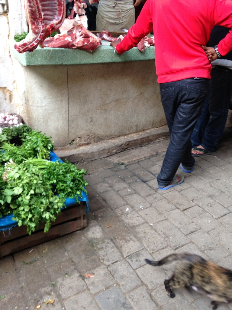 Fresh cilantro and skulking cats are common sights in the souks of Fez-el-Bali