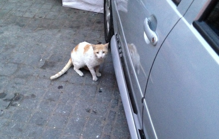 Felines are constantly prowling the streets of Marrakech.