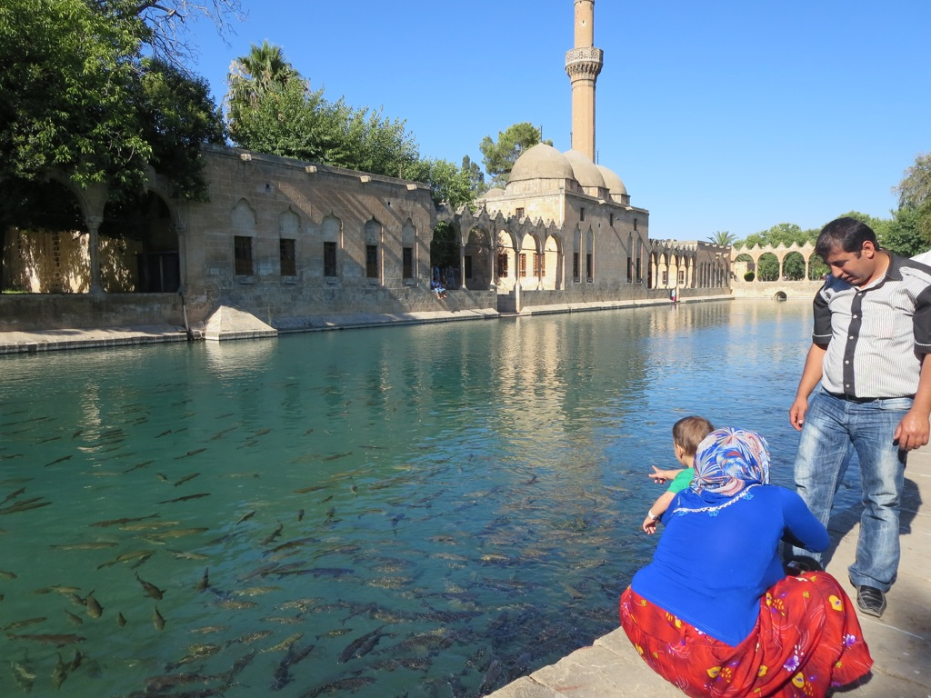 A family feeds the fish in the Pool of Abraham, Urfa, Turkey