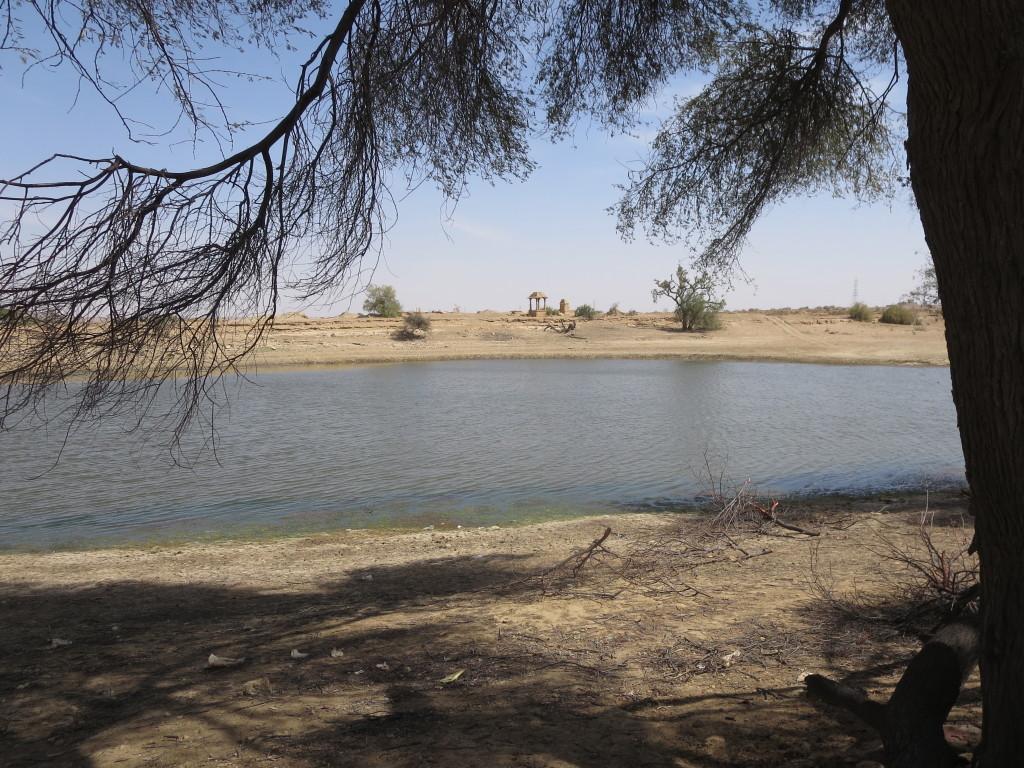 Desert oasis, Jaisalmer, India.