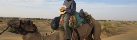 A Camel Kneeling for Dismount