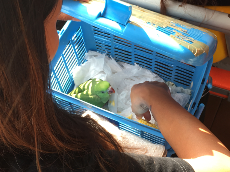 A woman hand feeds her pet bird while on a southbound workday ferry commute on the Chao Phraya.